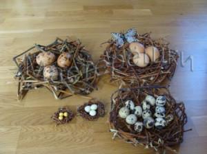 Пять гнезд копия